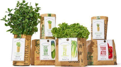 Organic Herb Grow Kits