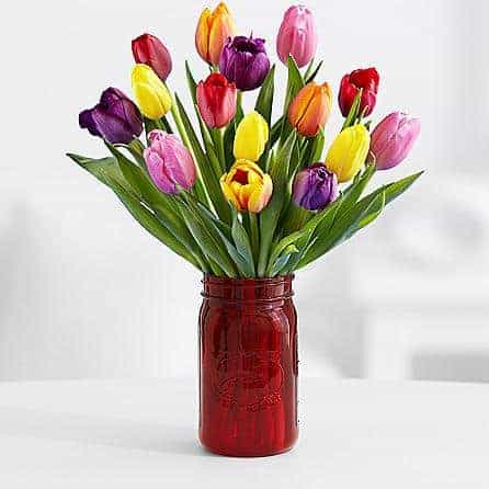 Where to Buy Valentine's Day flowers online: Multi-colored Tulips from ProFlowers